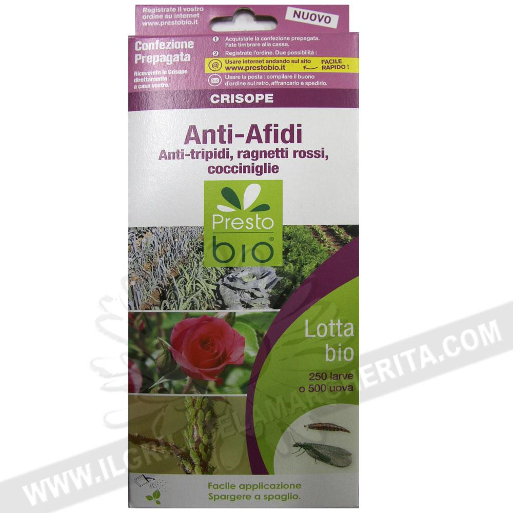 Crisope anti afidi e tripidi for Divora larve di zanzara